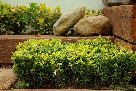 Punica Peyzaj - Değiştirdiğimiz Bahçeler:Koşuyolu'nda bir restaurant